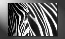 'Animal Stripes' Obraz