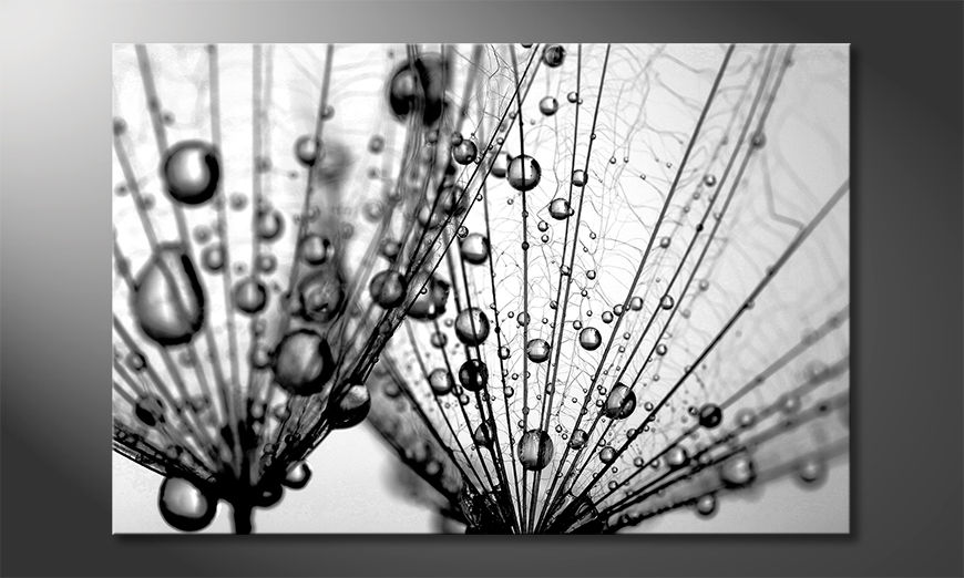 ?adne malowanie Dandelion Seed