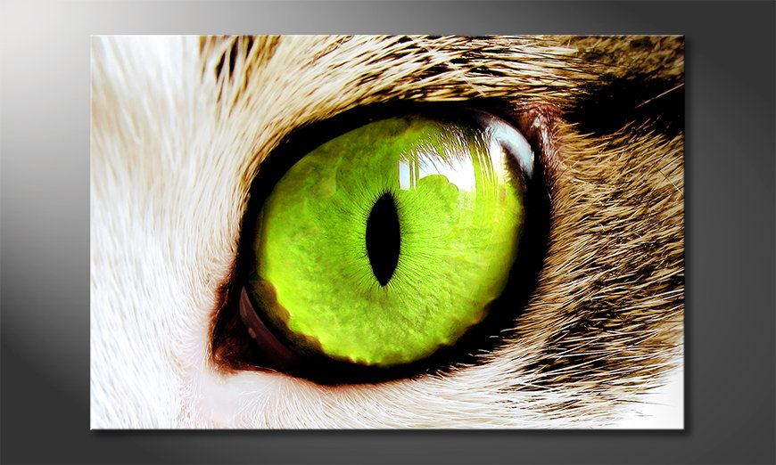 Cats Eye Obraz