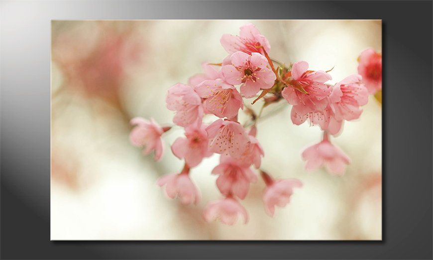 Cherry Blossoms Obraz