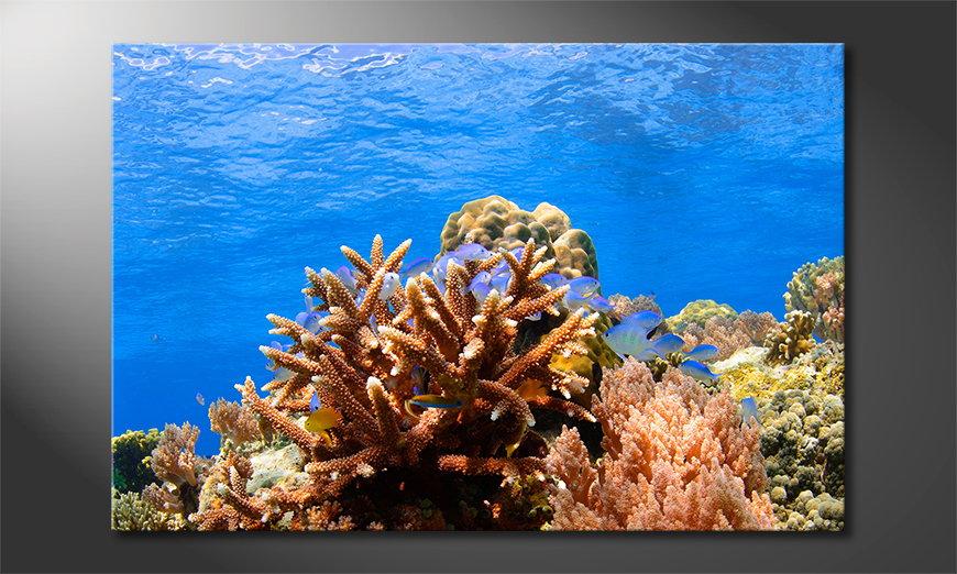 Corals Reef Obraz