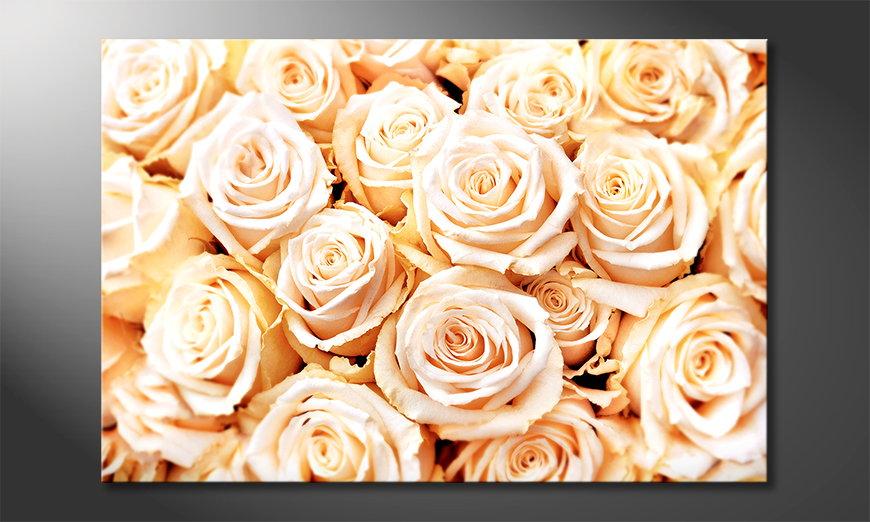 Creamy Roses Obraz