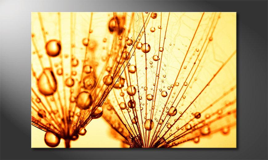 Dandelion Closeup Obraz