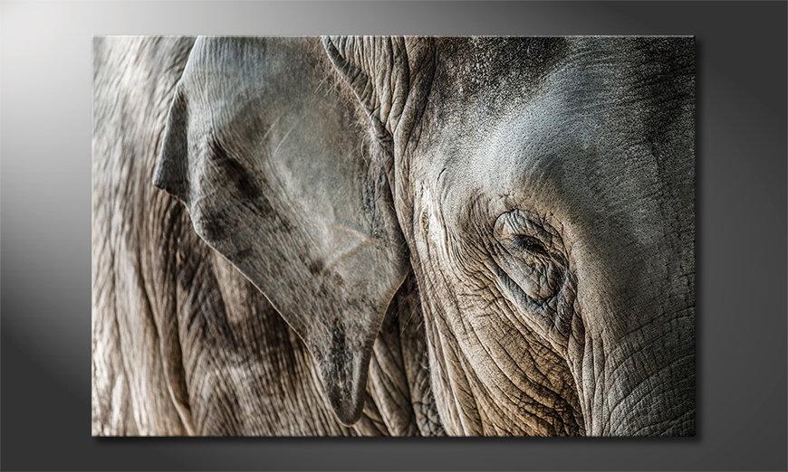 Eye of Elephant Obraz
