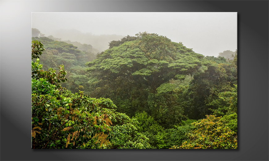 Jungle Obraz