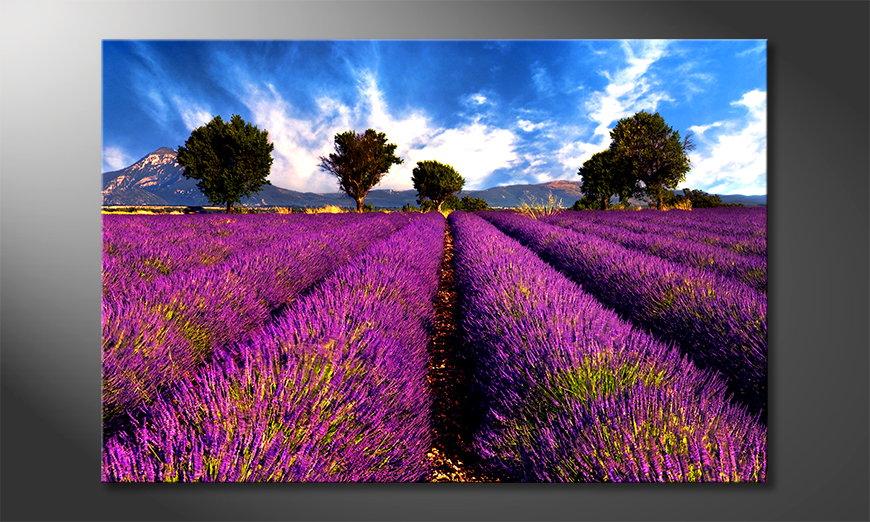Lavender Obraz