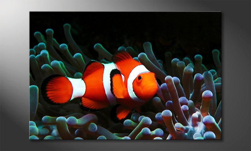 Nemo Obraz