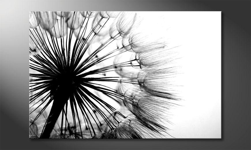 Obraz Big Dandelion