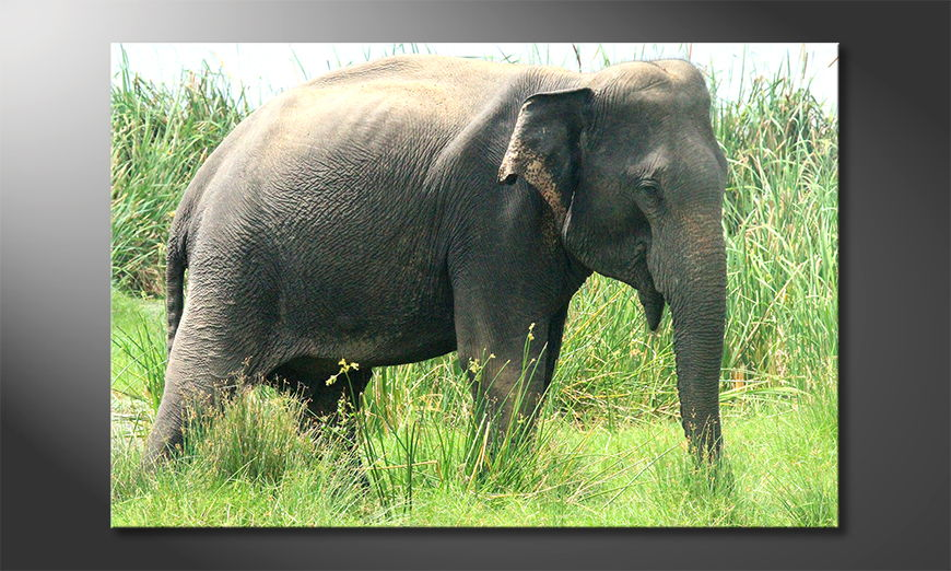 Old-Elephant-Obraz