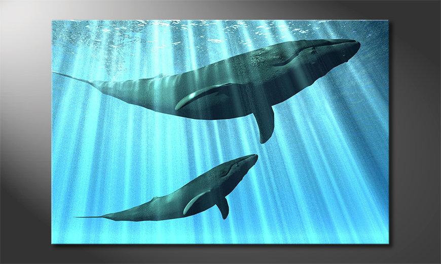 Whales Obraz