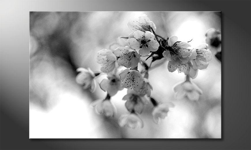 Wydrukowany obraz Cherry Blossoms