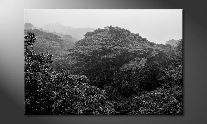 Wydrukowany obraz Jungle